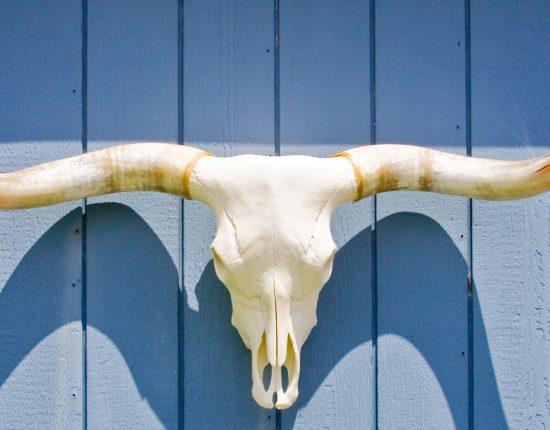 longhorns-1